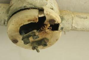 通水不足による被害2「配管内の錆付き」