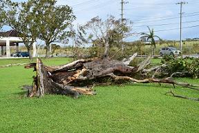 台風による被害は火災保険で補償されます!