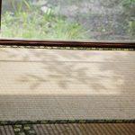 注意!夏場の畳のカビ