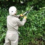 スタッフ日記空き家の生垣の剪定をしてきました